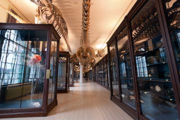 Universitetsmuseet åpner igjen etter seks år